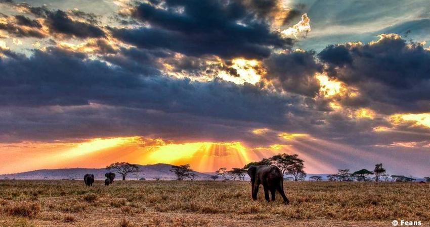 Tanzania, Safari di Lusso